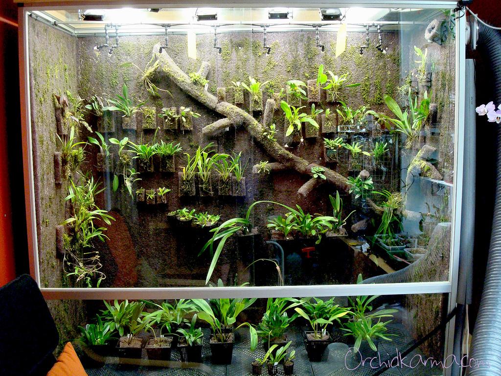 Cool Vivarium A Photo Update Orchidkarma