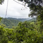 El Copal rainforests as long as the eye can see