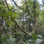 Rainforest on Chai