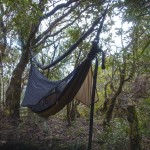 Camp 2 - my Warbonnet Blackbird XLC hammock
