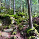 Bohusleden i Svartedalen