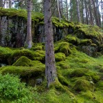 Amazing moss forests