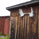 Moose antler house decor