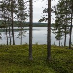 Pine forests and lakes