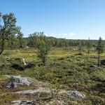 Kungsleden lowlands