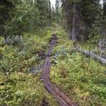Derelict trail
