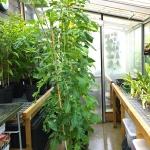 Greenhouse 2015